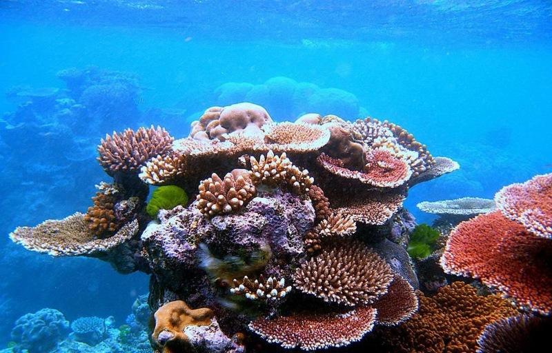 Đến du lịch Úc du khách không thể bỏ qua việc lặn biển với Rạn san hô Great Barrier