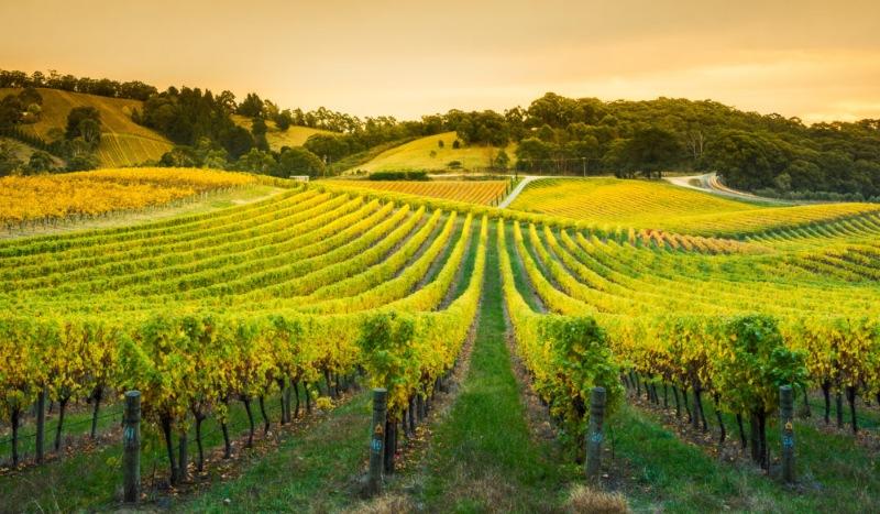 Bạn sẽ được thăm các thung lũng nổi tiếng với nghề sản xuất rượu vang chất lượng cao như Thung lũng Clare
