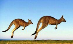 Những điều thú vị về nước Úc – Xứ sở Oz