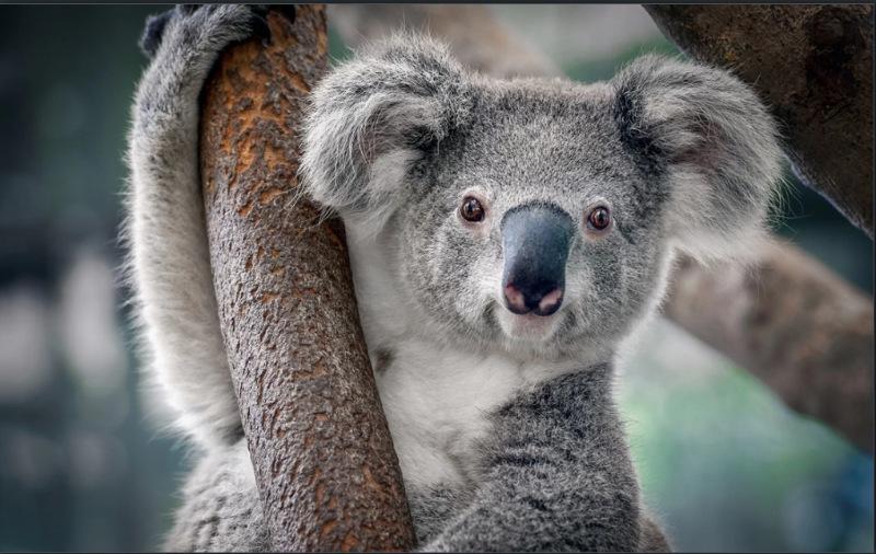 Nước Úc có tới 80% những loài động vật hoang dã, mà không được tìm thấy ở các quốc gia khác