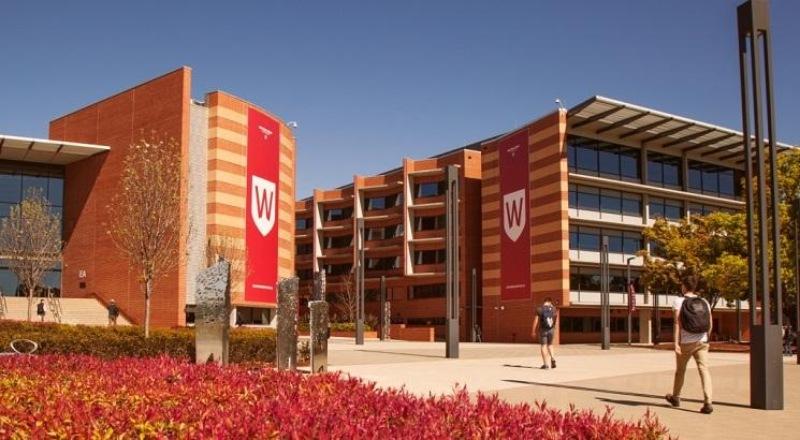 Đại học Tây Sydney thuộc bang New South Wales nơi mình theo học, bắt buộc sinh viên phải hoàn thành 800 giờ thực tập không được trả lương mới đủ điều kiện ra trường